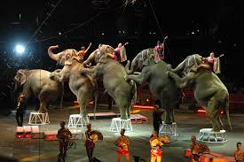 Circus Elephants Parade
